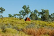Spinifex #2
