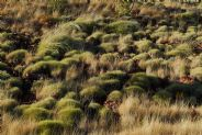 Spinifex #3