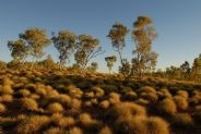 Spinifex #5