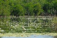 Kakadu National Park: the billabong