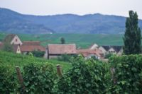 Alsatian vineyards #2