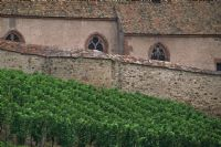 Alsatian vineyards #3