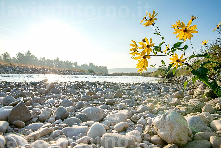along the Piave river #3