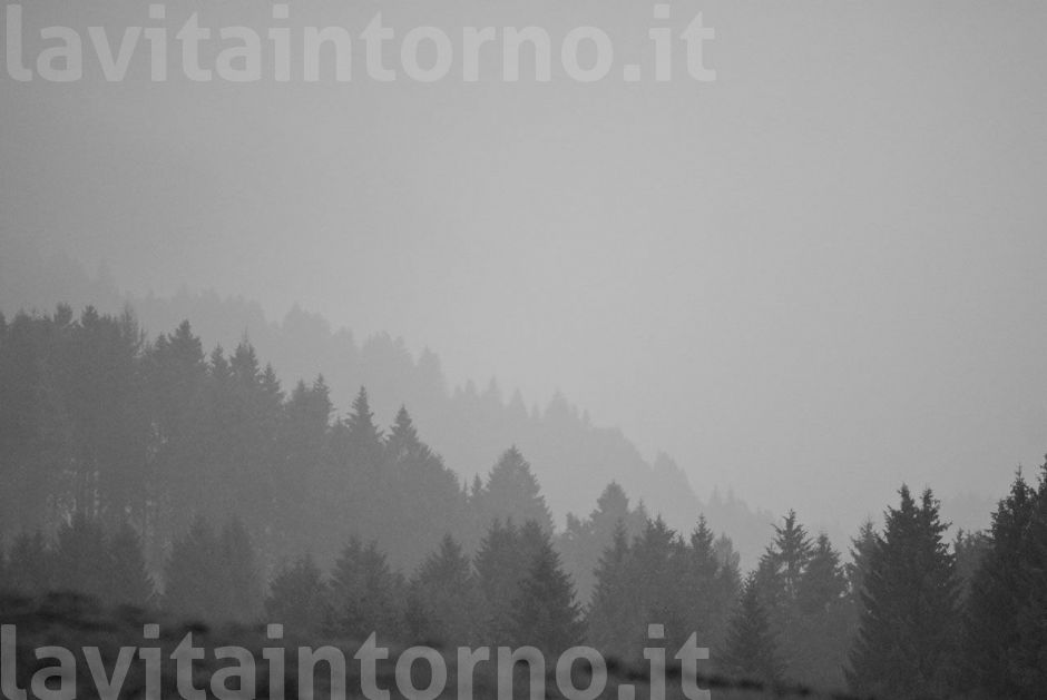 nebbia in Cansiglio #2